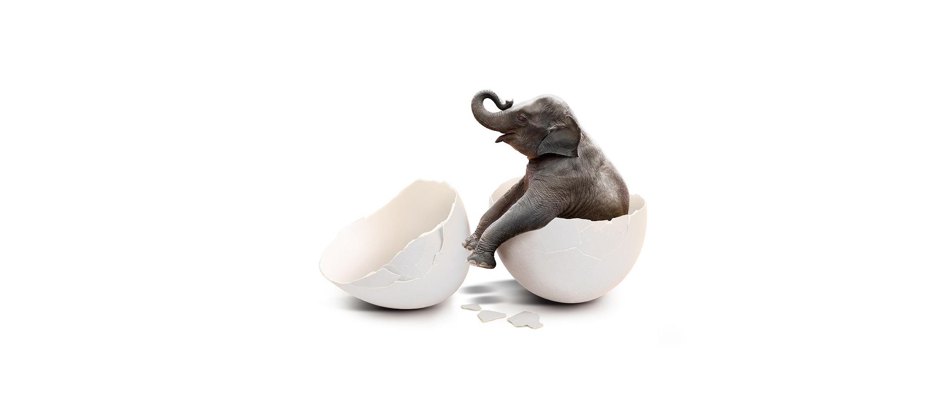 Warum eigentlich ein Babyelefant? | webundwerbung.at